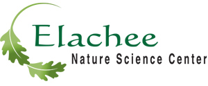 Elachee Nature Science Center Logo